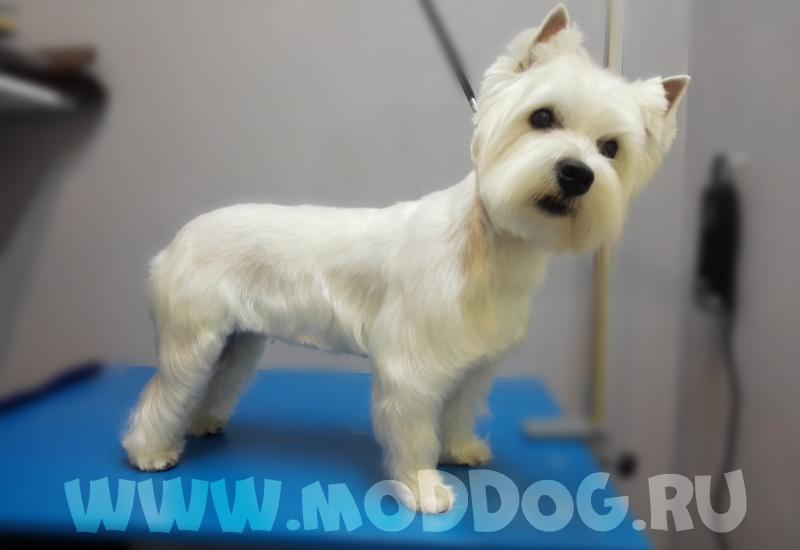 стрижка собак в Красноярске
